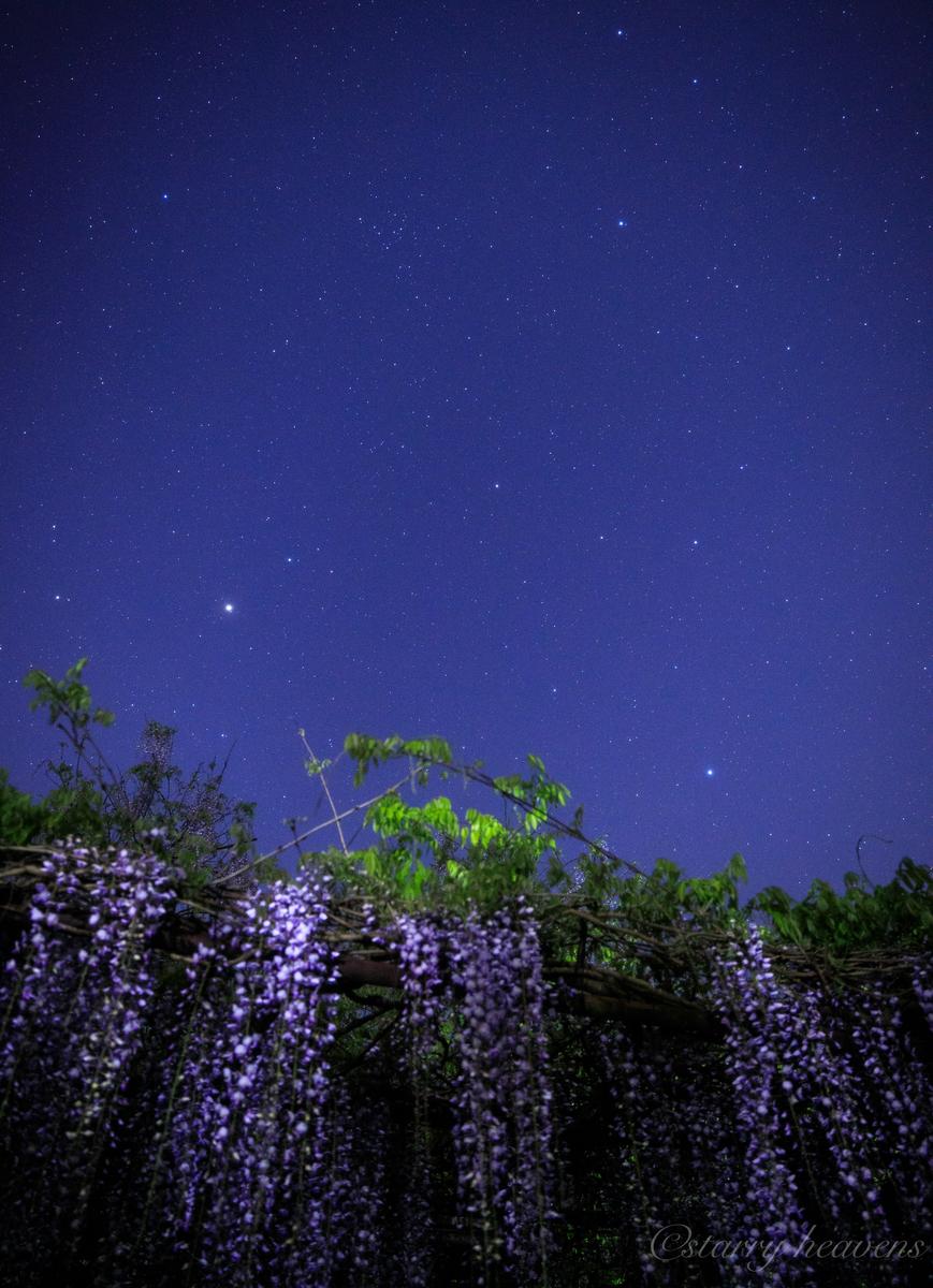 f:id:Starryheavens:20200504112533j:plain