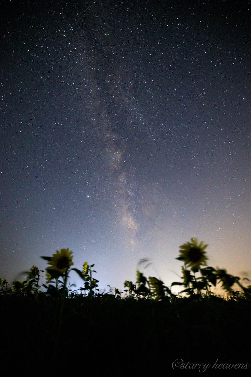 f:id:Starryheavens:20200907164753j:plain