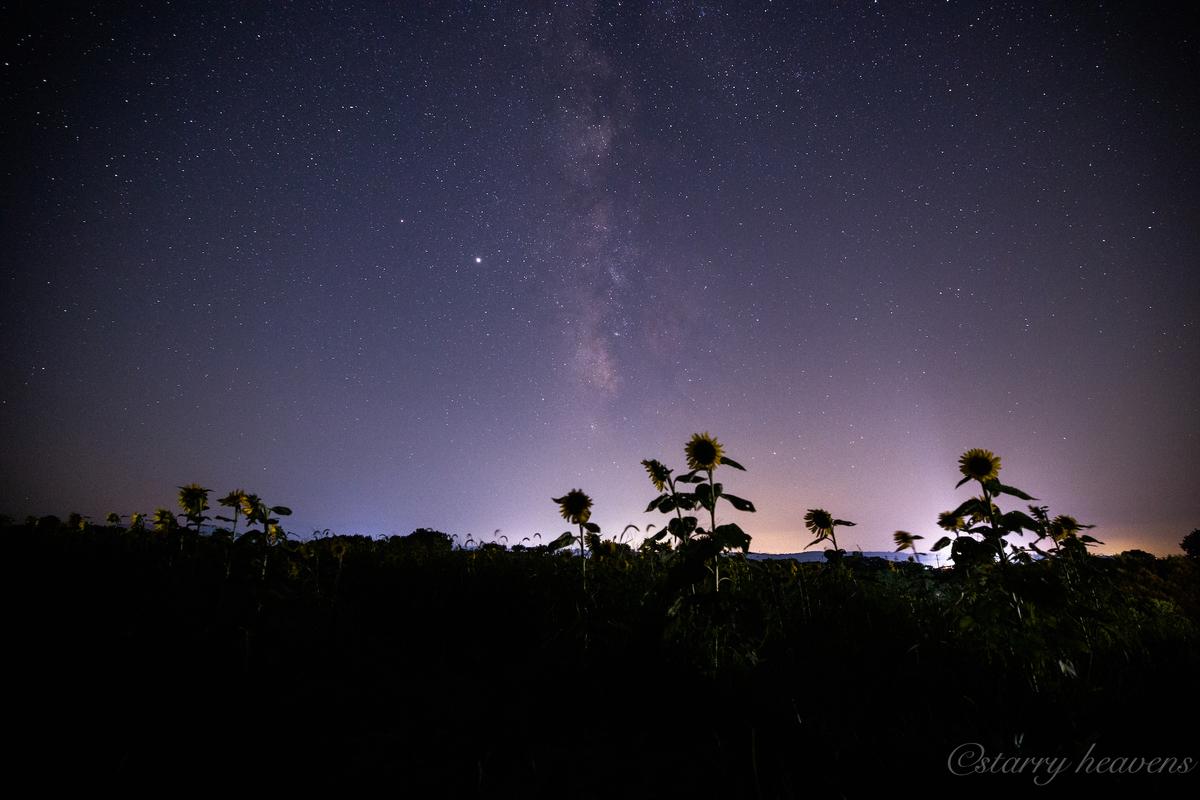 f:id:Starryheavens:20200907164806j:plain