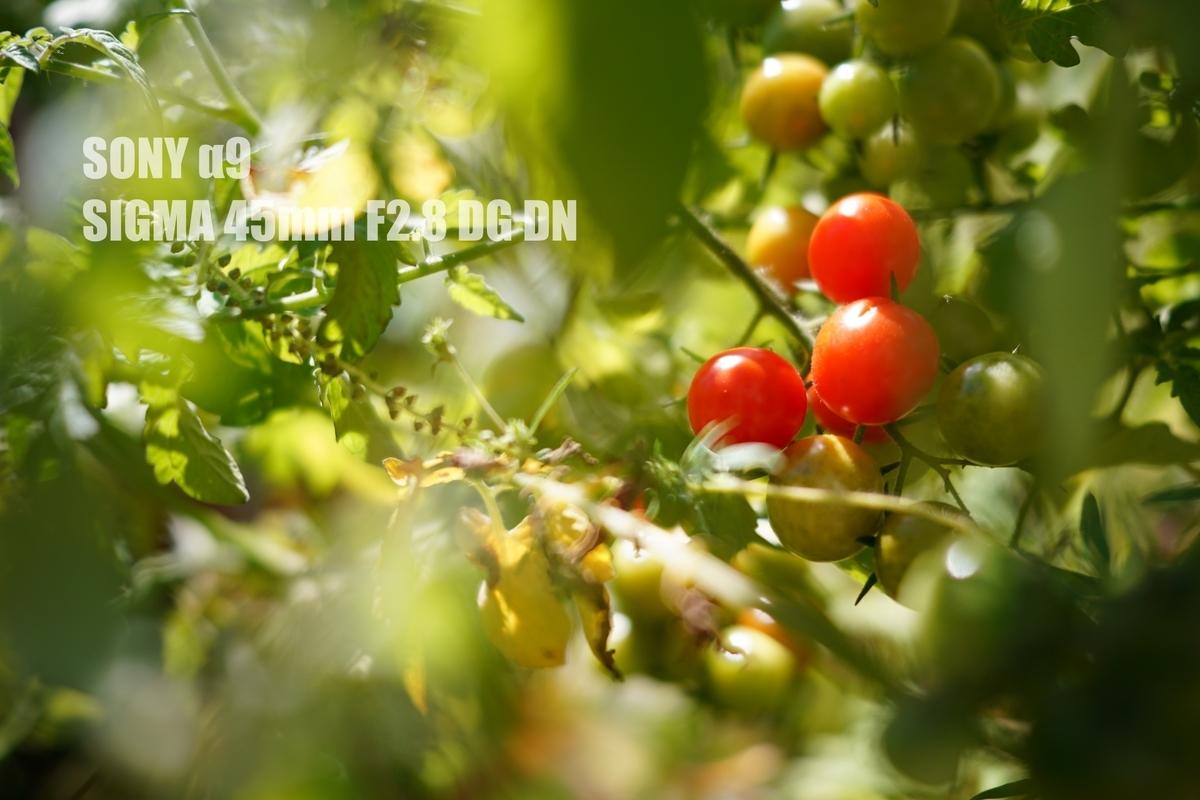 f:id:StrawberryNews:20210914132740j:plain