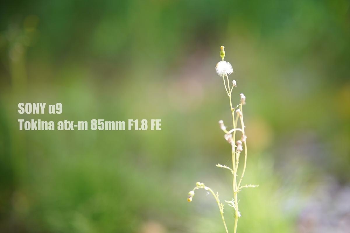 f:id:StrawberryNews:20210918124349j:plain