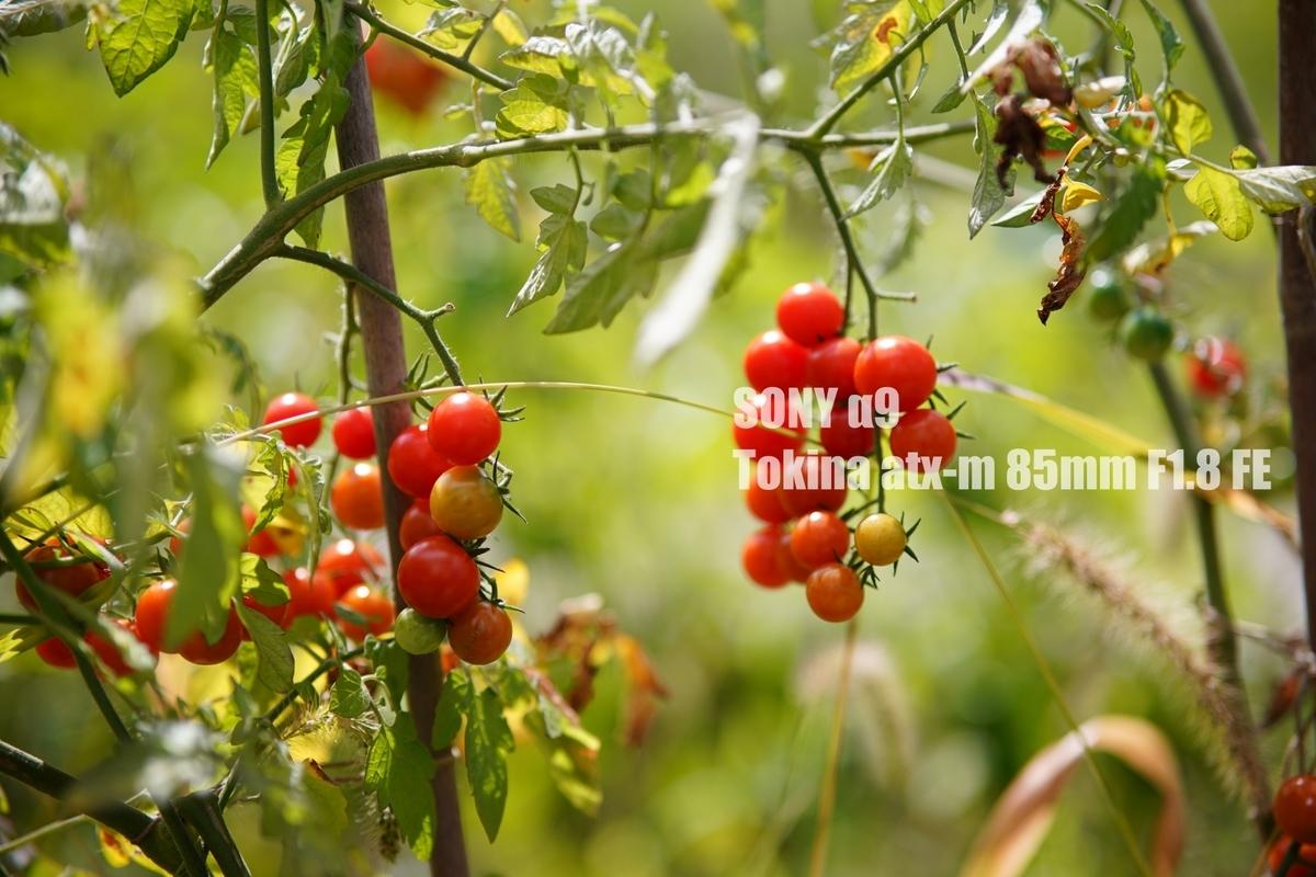 f:id:StrawberryNews:20210918124531j:plain