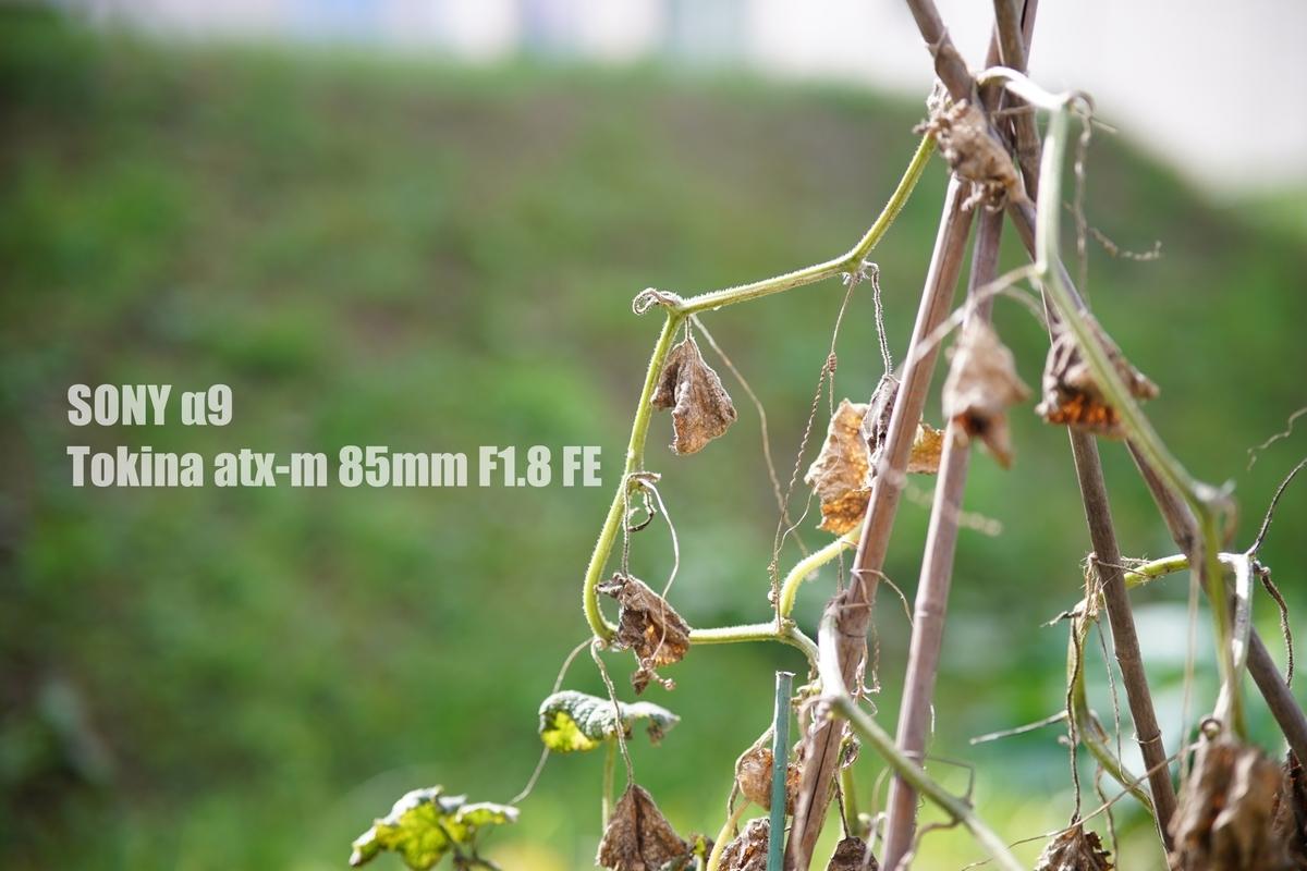 f:id:StrawberryNews:20210918124543j:plain