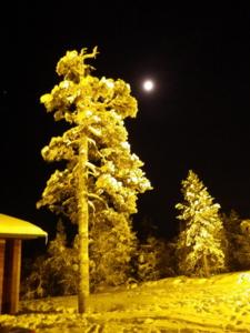 f:id:StrayCat:20121223191342j:image