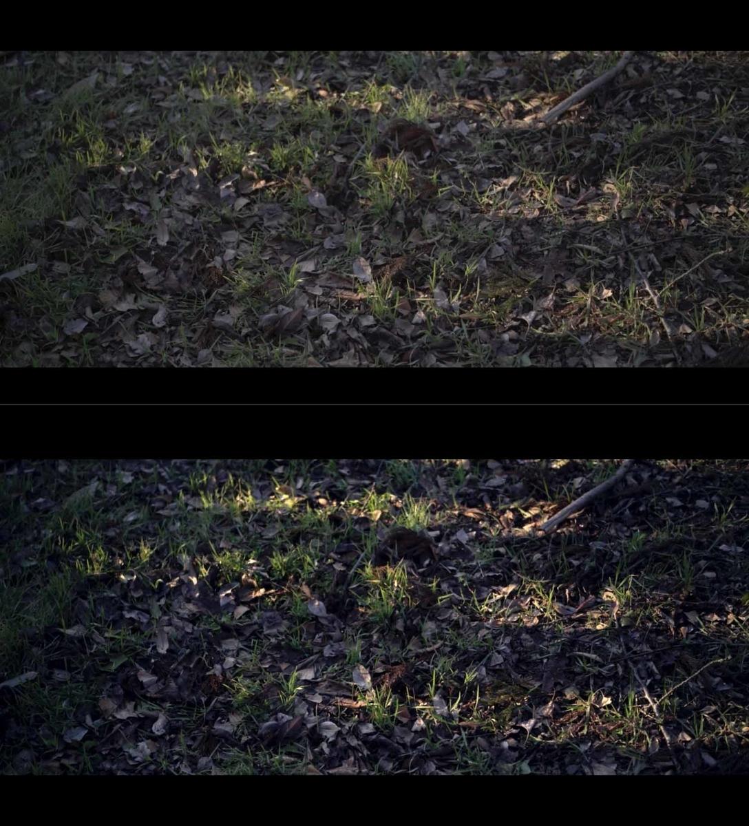 f:id:Studiocedarv:20200214205142j:plain