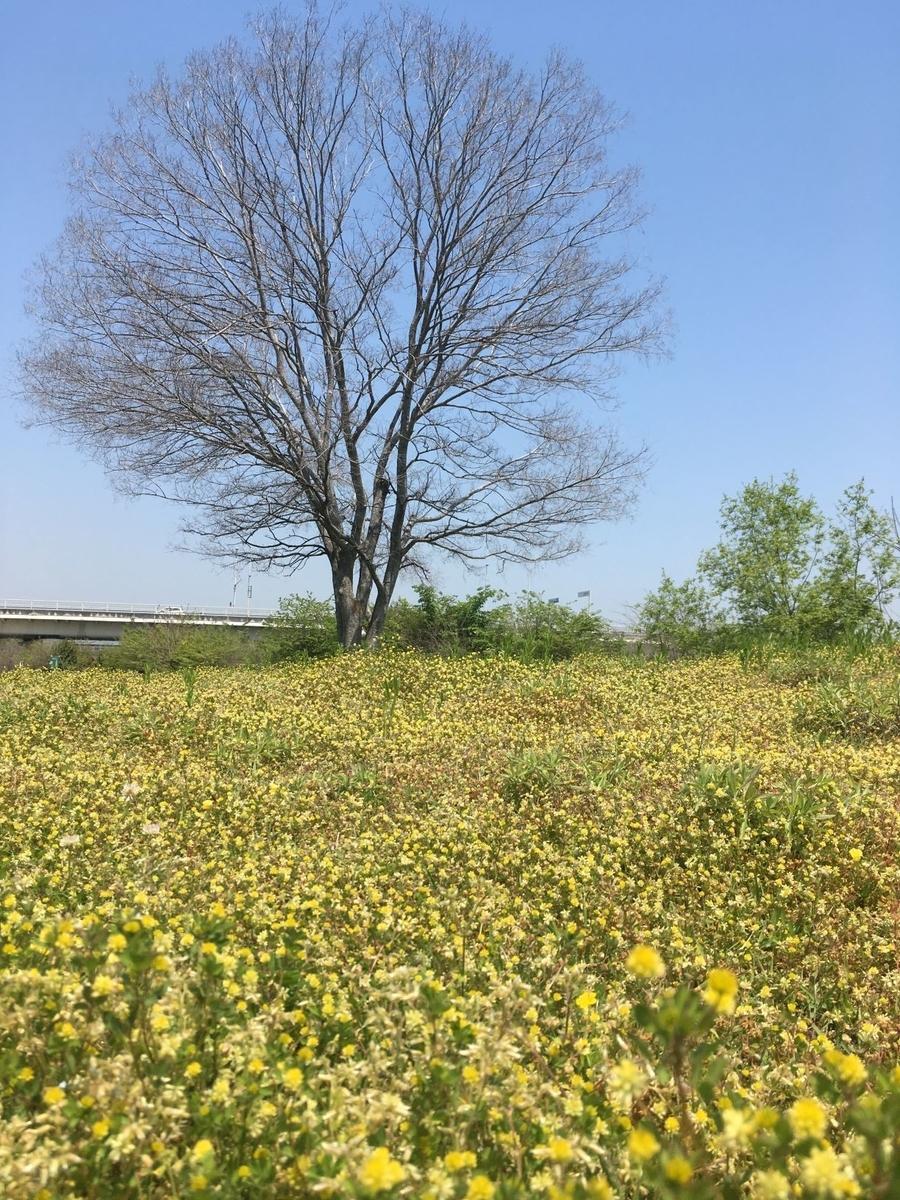 武庫川河川敷2