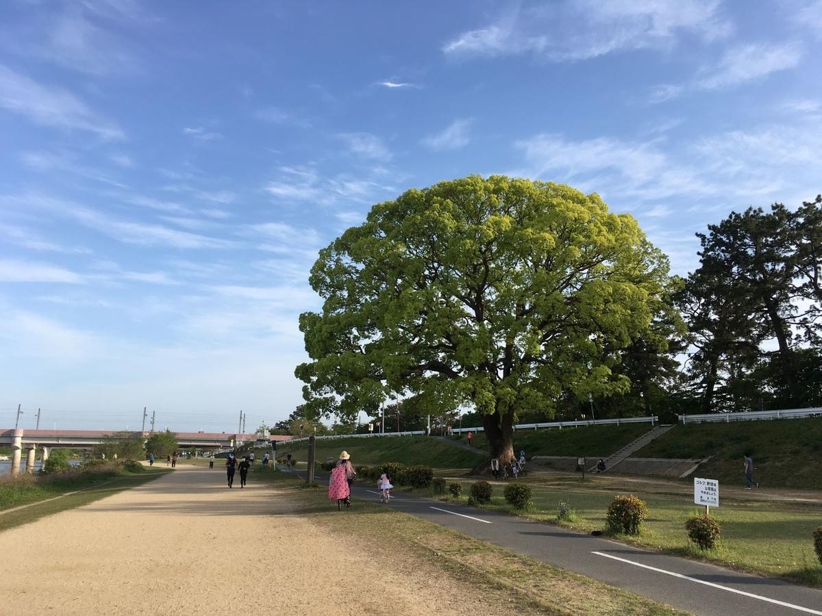 武庫川河川敷の大樹