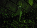 [夜][物][草][植物]傘