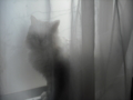 [猫]友人宅の猫氏