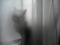 友人宅の猫氏
