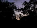 [空][夕方][植物][木]夕空