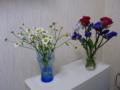 [花][物][植物]花