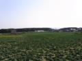 [空][植物][草][田畑]キャベツ畑