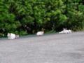 [猫]猫の家族
