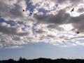 [鳥][雲][空]雲と鳥影