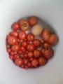 [植物][食べ物][物]トマトトマトタマゴ