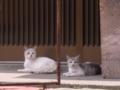[猫]猫のきょうだい