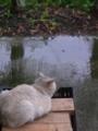 [猫]雨やどり