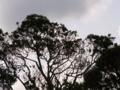 [木][空][雲][植物]木