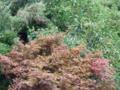 [植物][木]紅葉と柿