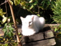 [猫]白飛び猫