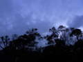 [空][雲][夕方][木][植物]夕空