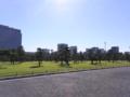 [公園][木][植物][空]皇居前広場
