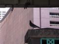 [鳥]ハト