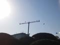 [鳥][街灯][太陽][空]ユリカモメ