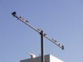 [鳥][街灯][空]ユリカモメ