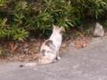 [猫]三毛猫
