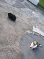 [猫]黒と三毛