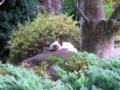 [猫][木][植物]シャム猫