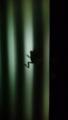 [カエル][夜]カエル影