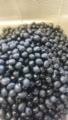 [物][食べ物]黒豆