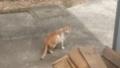 [猫]茶虎猫