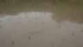 [雨][草][田畑]雨