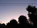 [空][木][電線]朝焼け