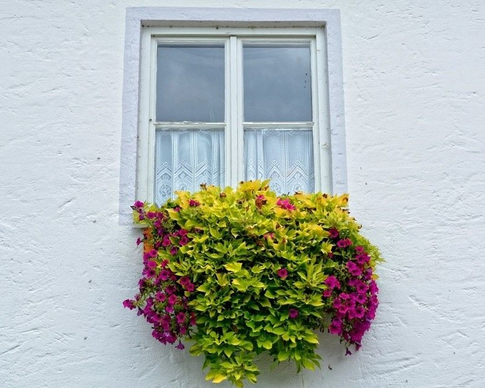 window-flowers-flower-box-facade-plant-flower