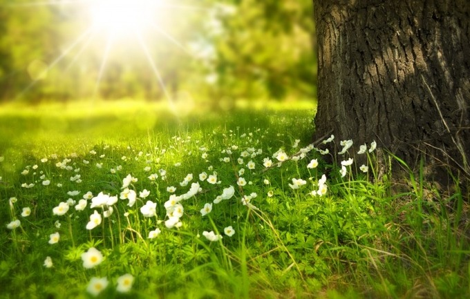 spring-tree-flowers-meadow-wood-forest-sun