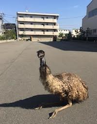 f:id:SugiuraMasaki:20170105140740j:image