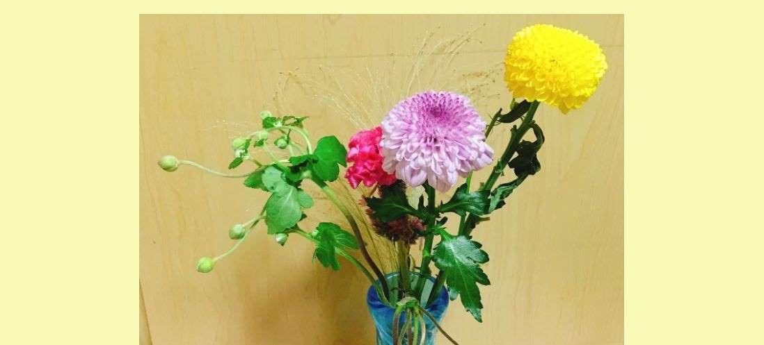 今日のお花 菊