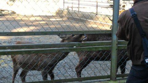 鹿島神宮 - 鹿