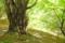 [登山][巨樹]