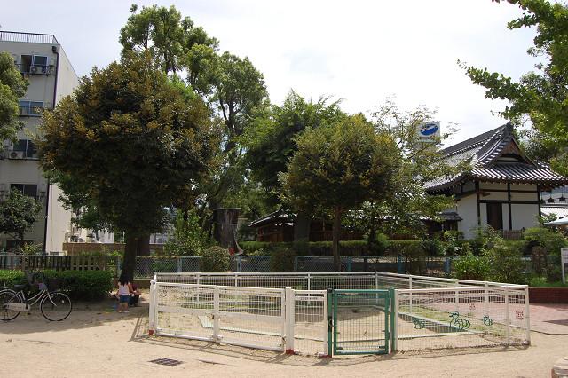 蒲田神社のクスノキ