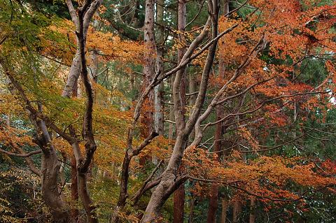 高尾山・稲荷山コース