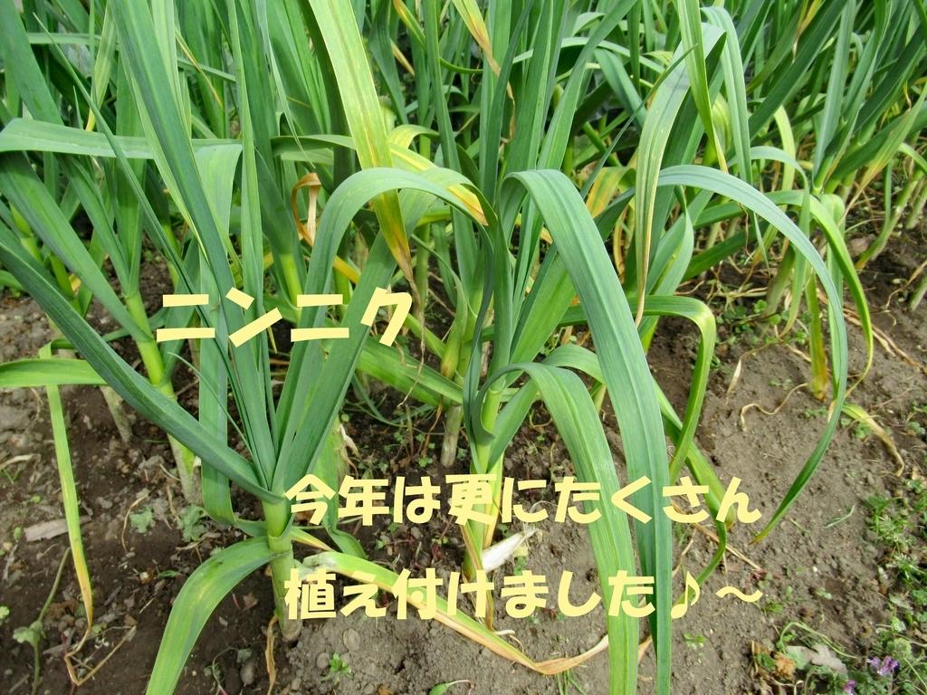 f:id:TAKAOKIYOMI:20190221135006j:plain