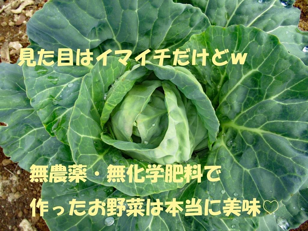 f:id:TAKAOKIYOMI:20190221142658j:plain