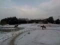 クレイン雪