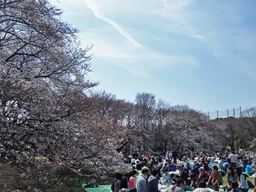 砧公園 世田谷区 花見 2009